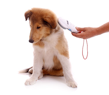 Compulsory Pet Microchipping