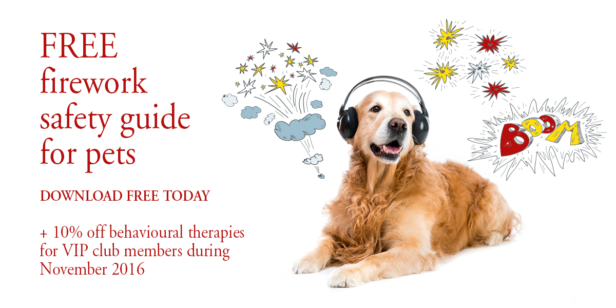 How To Register A Dog As A Therapy Dog Uk