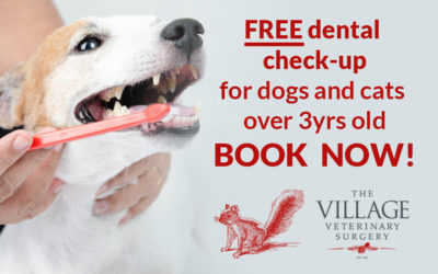 Learn why dental health is so important to your pet's health