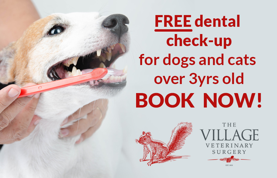 Village Vets are encouraging good dental health in pets