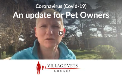 Coronavirus: Important Updates for Pet Owners in Formby